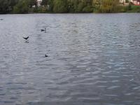 Brookvale Parque del Lago