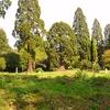 A Very Green Cemetery