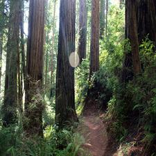 Brown Creek Trail