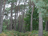 Brownsea  Wood
