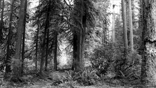 Brown's Trail 133 - Tonto National Forest - Arizona - USA