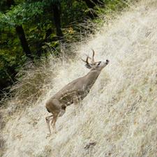 Buck Montanha