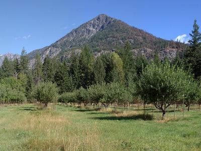 Buckner Orchard Walk