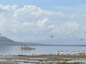 11 Days Best Of Kenya Budget - Wildlife Cultural Safari Fotos