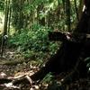 Bukit Gemok - Sabah