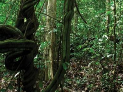 Bukit Gemok - Tawau