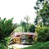 Bukit Gemok - View