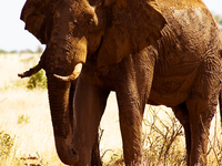 Tsavo East National Park 2 Days Safari
