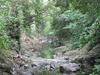 Bunch Creek  California