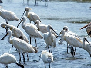 Bird Watching in Srilanka Fotos