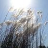 Burachapori Santuario de Vida Silvestre