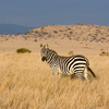 Lewa Safari Package