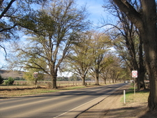 The Avenue Of Honour In Bacchus Marsh