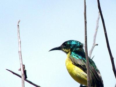 Bird Of Saadani National Park