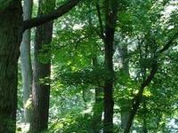 Belt Woods