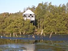 Viewing Platform In Wetlands