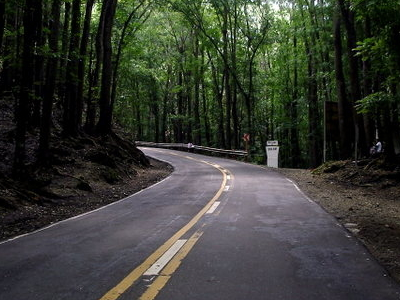 Road Through A Mahogany Forest In Bilar