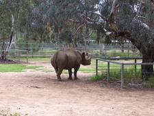 Blackrhino At Taronga Western Plains Zoo