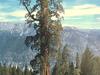 Boole  Tree