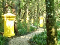 Bosque de Portugal