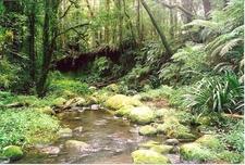 Brindle Creek