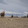 Bristle Cone Pines California