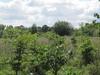 Field In Burtonhole Lane And Pasture