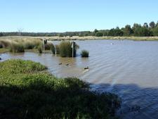 Bushy Park Wetlands