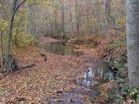 Cabin John Creek