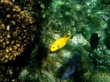 Cabo Pulmo Marine Treasure