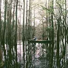 Caddo Lake SP