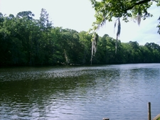 Caddo Lake Channel