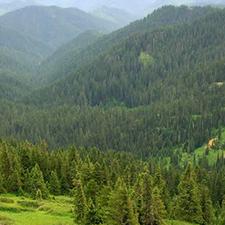 Calapooya Mountains
