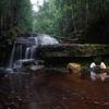 Calvin Maliau Basin Upper Ti