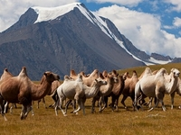 Altai Tavan Bogd Parque Nacional