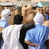 Camel Market - Mauritania