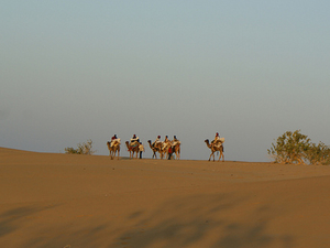 Camel Safari in Rajasthan Photos
