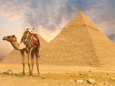 Camel With Pyramids At Giza