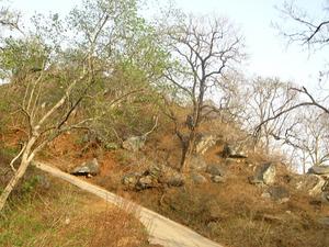 Hills Canárias