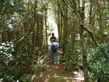 Cane Spring Trail 77 - Tonto National Forest - Arizona - USA