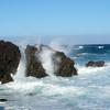 Canido Playa