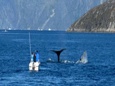 Capital Region Whale Adventures