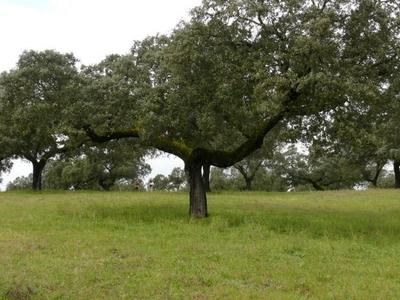 Cardena-Montoro Natural Park Spain