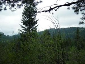 Cartwright Ridge Campground