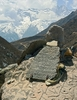 Carved Mantras In Nepal Himalayas