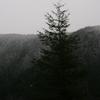 Cascade Range Near Government Camp