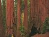 CA Sequoia NP Views