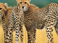 Nemm Tours & Safaris