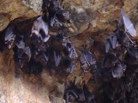 Bat Cave Temple