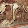 Museo Húngaro de Historia Natural